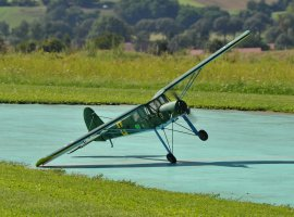 Storch_6